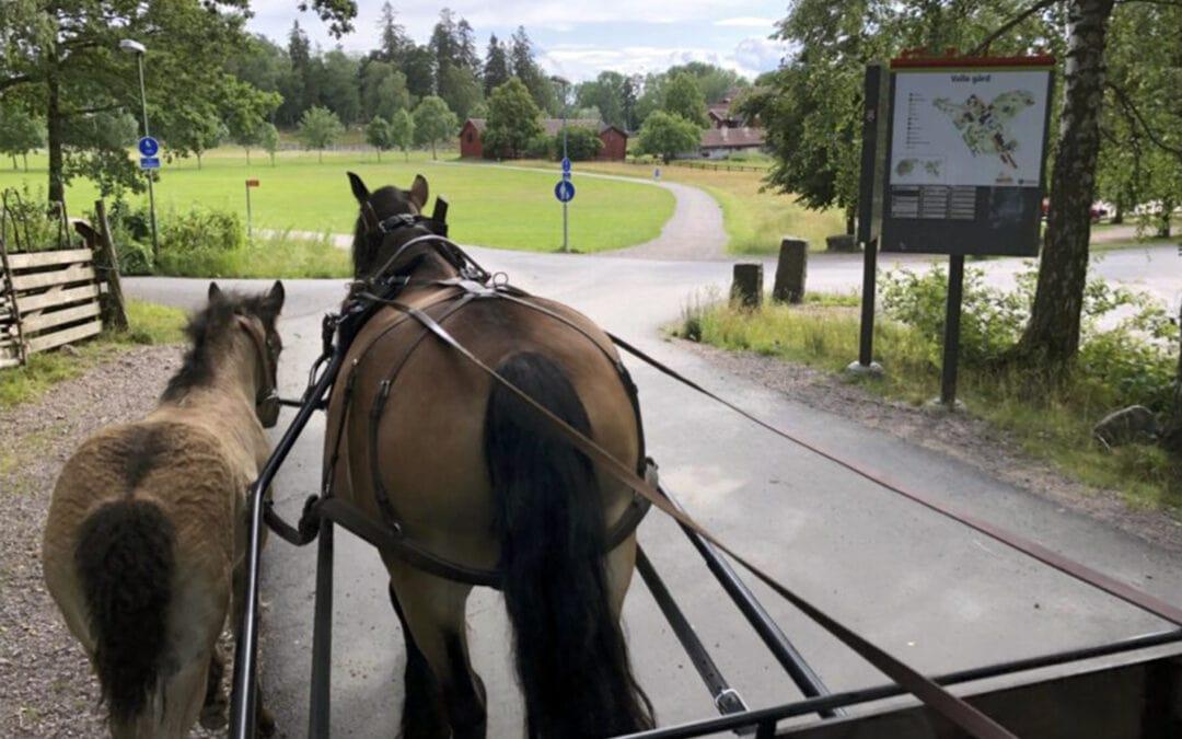 Hästdagen 2020 i Östergötland!