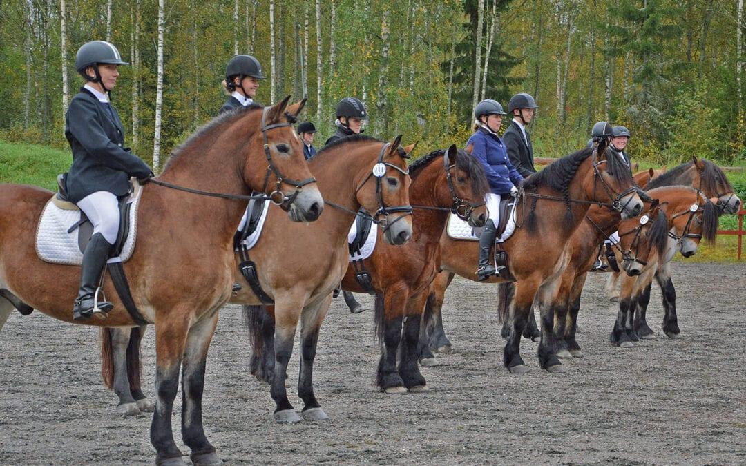 SM Nordsvensk Brukshäst