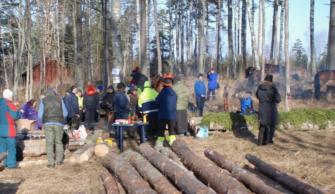 Skogsdagen i Morkarla