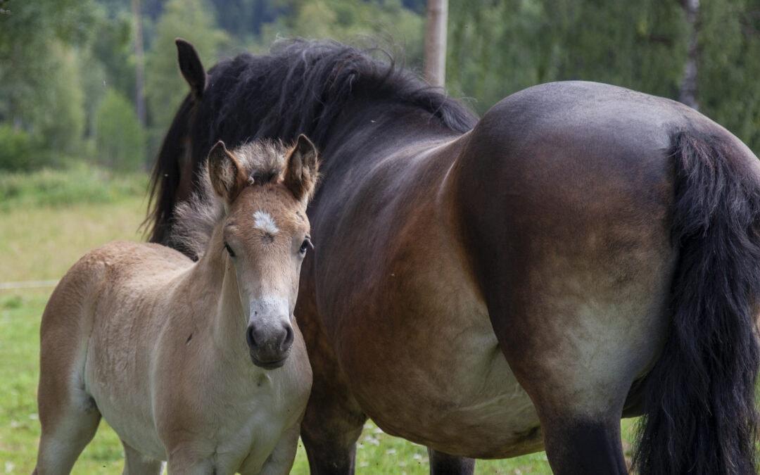 Information om nya djurhälsoförordningen
