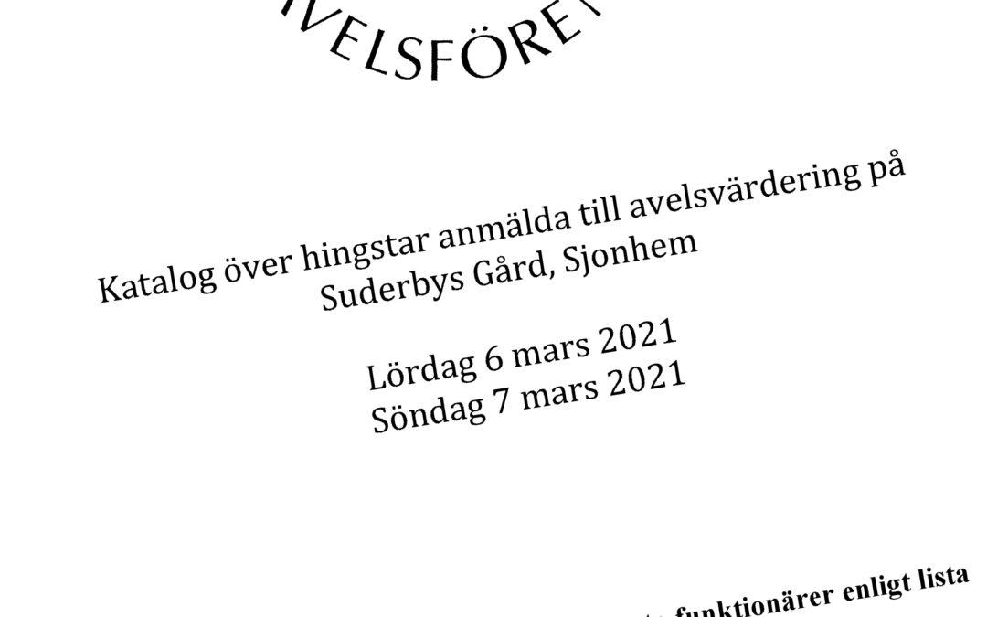 Nordsvenska hingstar som visas på Gotland