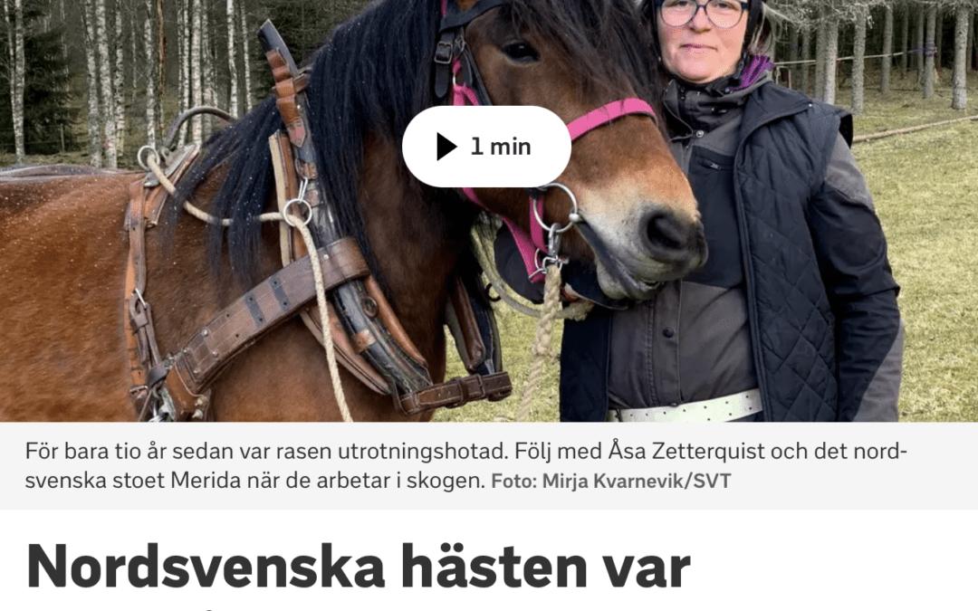 Reportage i SVT Halland