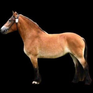 Hästens exteriör