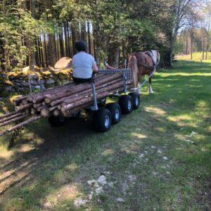 Skogsarbetsdag FNHHALLAND